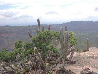 chapadacactus